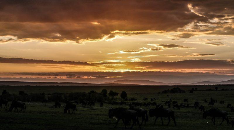 Afryka dzika… nie tak dawno odkryta